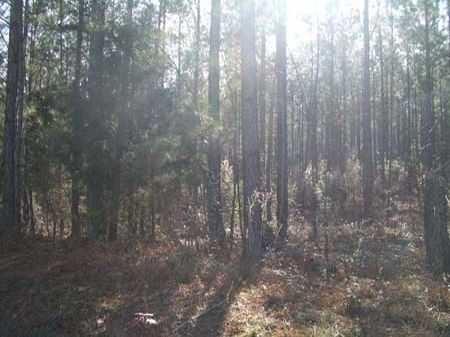 101 Acres on Coaling Road