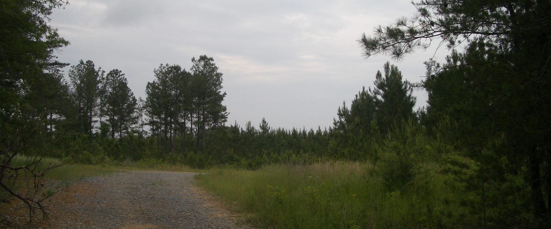 508 Acre Tree Farm – Hwy 100