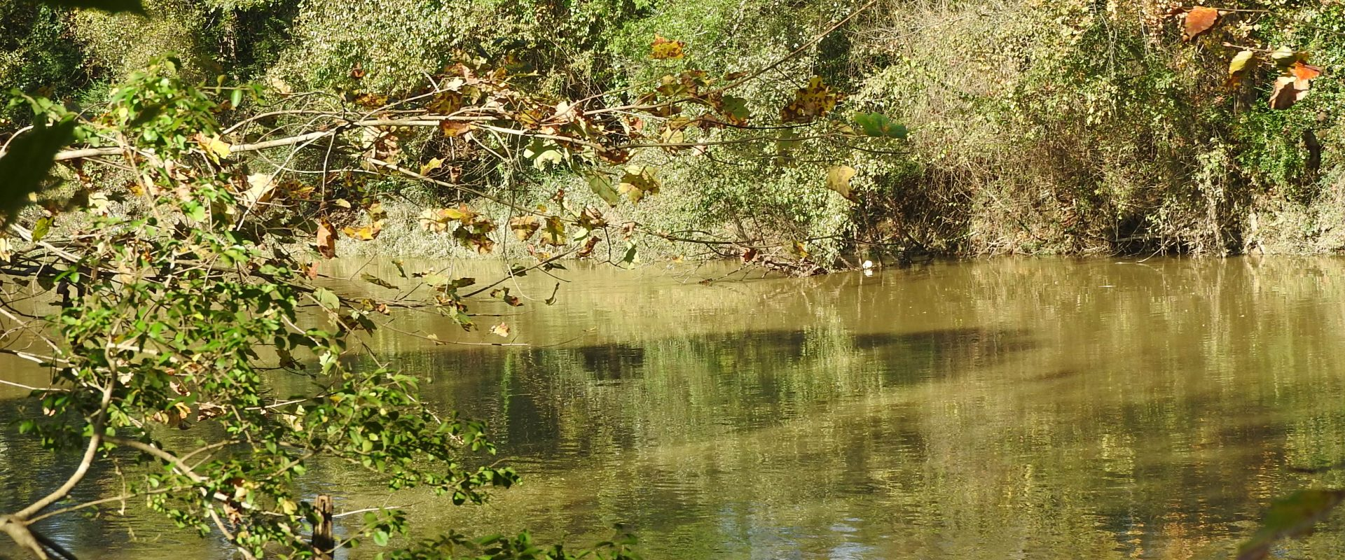 55.6 +/- Acres on Oostanaula River